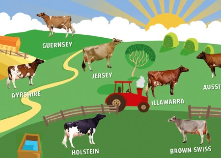 Australian cow breeds interactive game
