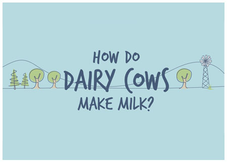 How do dairy cows make milk?